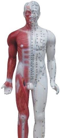Nuñeco-acupuntura